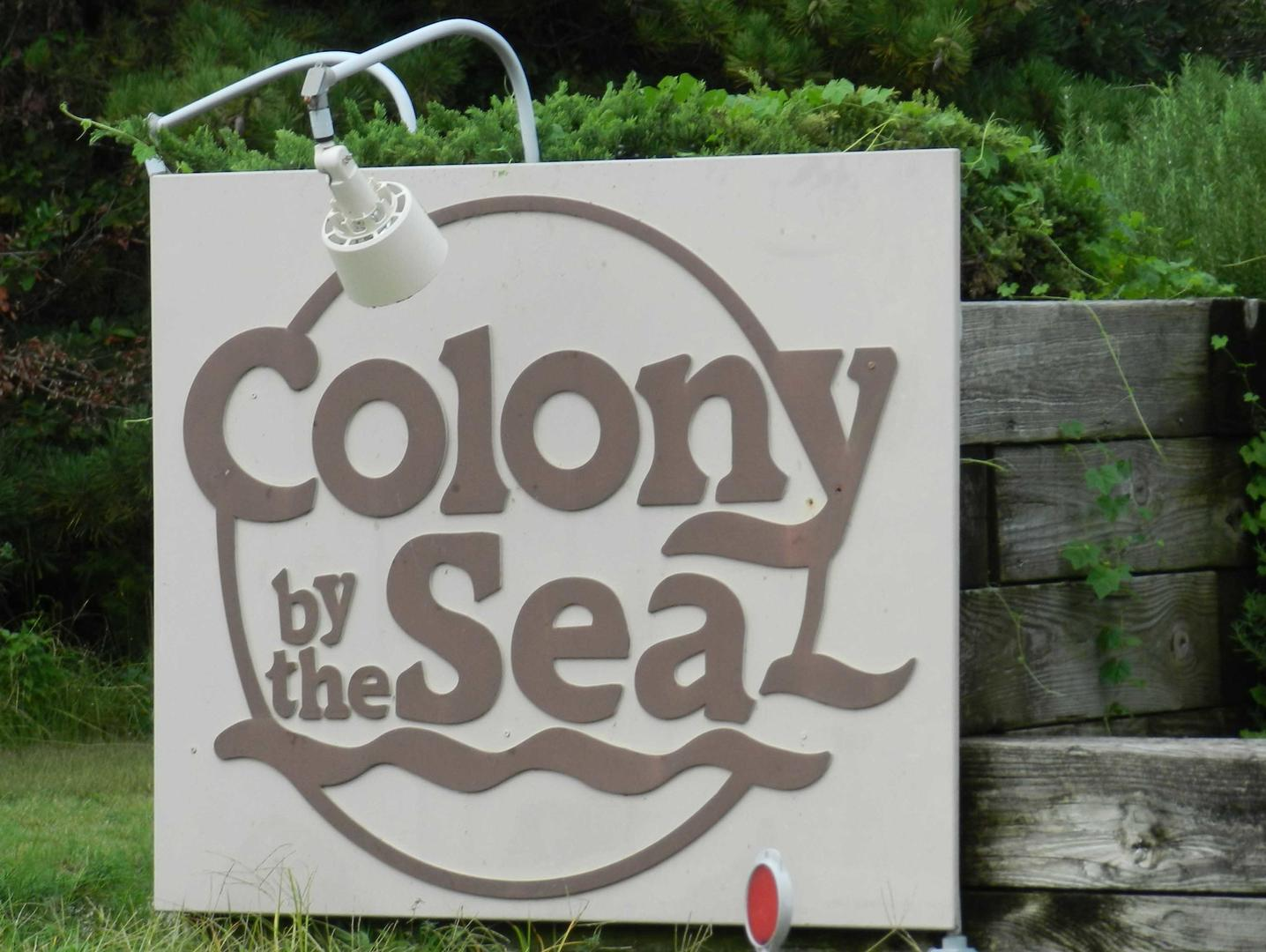 Colony By The Sea