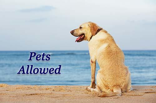Pets Allowed