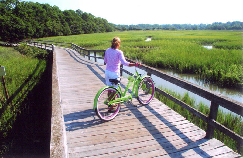 Bicycle can be rented at Excursions