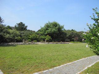 Grassy front yard