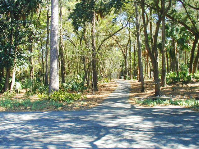 Tree-lined walkway to beach