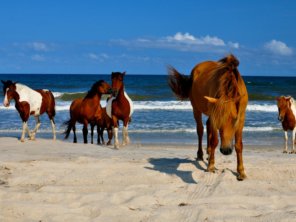 Short Drive from the Wild Ponies of Assateague Island