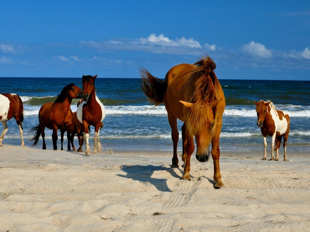 Short Drive to Nearby Assateague Island