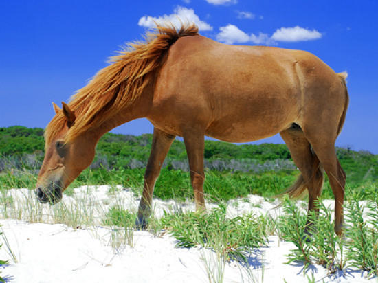 Go Site Seeing at Assateague Island