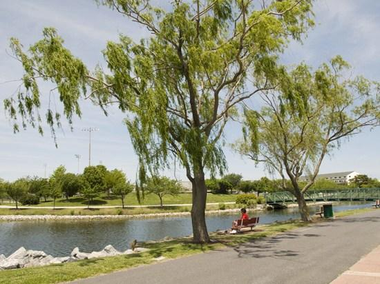 Lorelei I 404 - Northside Park Wateray