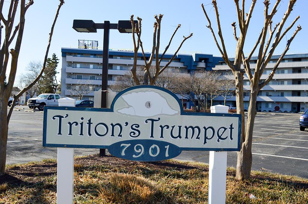 Tritons Trumpet 504C- Exterior